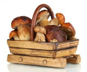champignons dans un panier en bois pour réaliser un gratin aux légumes